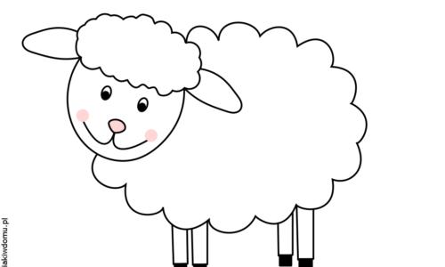 owieczka1